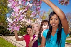 Amigos felizes sob um Magnolia foto de stock