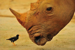 Amigos grandes & pequenos Imagens de Stock