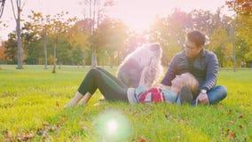Amigos multinacionais que relaxam em um parque Dia do outono no por do sol Com eles, um cão, uma mulher usa a tabuleta video estoque