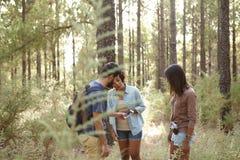 Amigos perdidos en un bosque del pino Foto de archivo libre de regalías