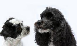 Amigos preto e branco do cão fotografia de stock royalty free