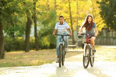 Amigos que montan las bicicletas en parque el día soleado Foto de archivo libre de regalías