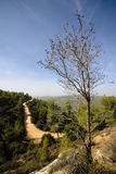 Aminadav Forest in Central Israel Stock Image