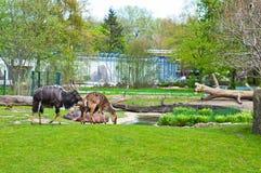 Aminal dans le zoo Images stock