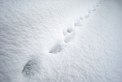 Aminal tracks on snow Stock Photos