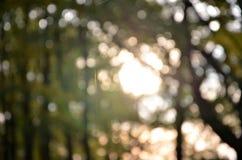 Amincissez les toiles d'araignée de fil dans la forêt Images stock
