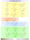 Amino acids table Stock Photography