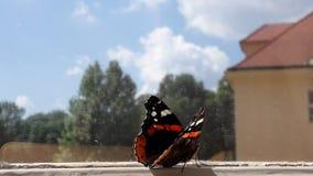 Amiral rouge de papillon sur la fenêtre Photographie stock libre de droits
