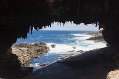 Amiralbåge på känguruön, södra Australien Royaltyfria Bilder
