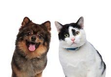 Amis affamés de chien et de chat attendant le déjeuner Images stock