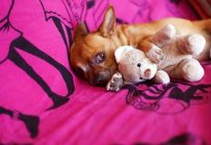 Amis animaux et rêves Image libre de droits