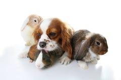 Amis animaux Véritables amis d'animal familier Le lapin de lapin de chien taillent des animaux ensemble sur le fond blanc d'isole Images libres de droits