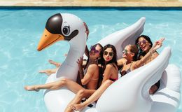 Amis appréciant sur un cygne gonflable dans la piscine Images libres de droits