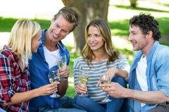 Amis ayant un pique-nique avec du vin Images libres de droits