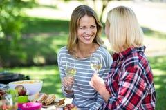 Amis ayant un pique-nique avec du vin Photo libre de droits