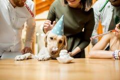 Amis célébrant l'anniversaire du ` s de chien Image libre de droits