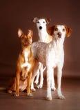 Amis canins Photos libres de droits