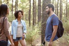 Amis causant dans une forêt de pin Photographie stock libre de droits