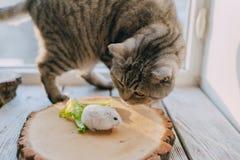 Amis chat et hamster Photo libre de droits