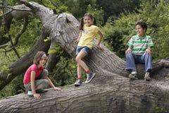 Amis détendant sur l'arbre tombé Image libre de droits