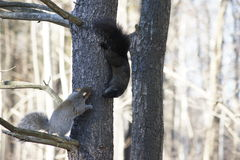Amis d'écureuil Photographie stock libre de droits