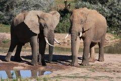 amis d'éléphant Image libre de droits
