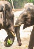 Amis d'éléphants Photographie stock