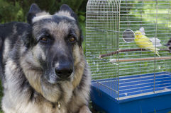 Amis d'animaux Photos libres de droits