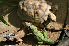 Amis dans le zoo Photographie stock libre de droits