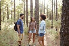 Amis dans une forêt de pin Photos libres de droits