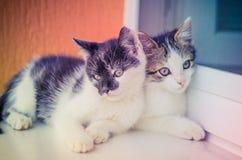 Amis de chat Photographie stock