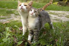 Amis de chaton Image stock