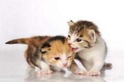 Amis de chaton Photographie stock libre de droits