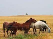 Amis de cheval Images libres de droits