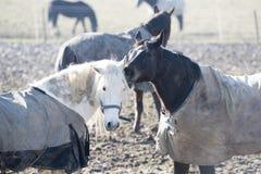 Amis de cheval Photos stock
