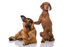 Amis de chien Image stock