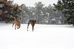 Amis de chien dans la neige Photos libres de droits