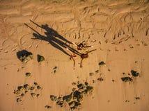 Amis de femmes ayant l'amusement des vacances de plage Photographie stock libre de droits