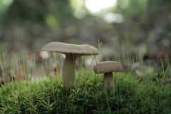 Amis de forêt Photo libre de droits