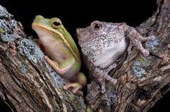 Amis de Froggy Photographie stock libre de droits