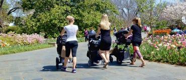 Amis de Millennials pour une promenade en parc Photos libres de droits