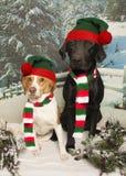 Amis de neige Photo libre de droits