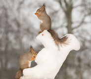 Amis de Snowsquirrel Images libres de droits