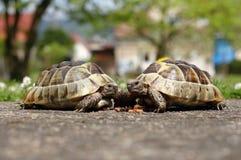 Amis de tortue Photographie stock libre de droits