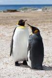 Amis du Roi Penguin Images stock