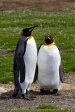 Amis du Roi Penguin Photographie stock