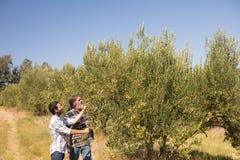 Amis examinant l'olive sur l'usine Photo libre de droits