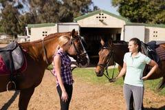 Amis féminins parlant tout en se tenant avec des chevaux Photos stock