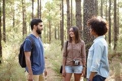 Amis faisant une pause dans la forêt Photo libre de droits