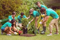 Amis heureux faisant du jardinage pour la communauté Photo libre de droits